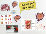 Cell organization's thumbnail
