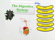 Digestive System's thumbnail