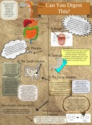 The Biochemistry of Digestion by Melody Yang's thumbnail