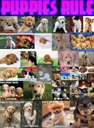 Puppies Rule's thumbnail