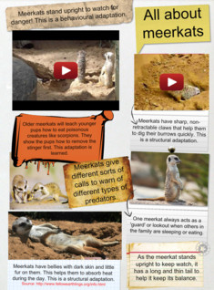 Meerkats and their adaptations