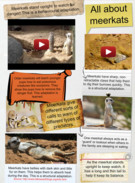 Meerkats and their adaptations's thumbnail