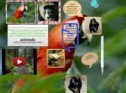 Aretha Jones' rainforest project's thumbnail