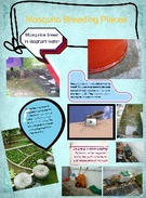 Mosquito Breeding Places 4's thumbnail