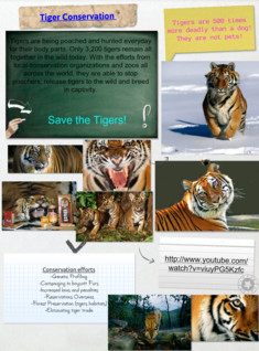 tiger conservation
