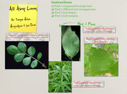 All About Leaves's thumbnail