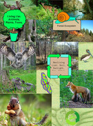 Forest Ecosystem's thumbnail