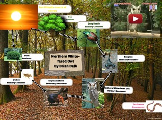 [2015] Brian Delk (Science period 7): Northern White-faced Owl food web