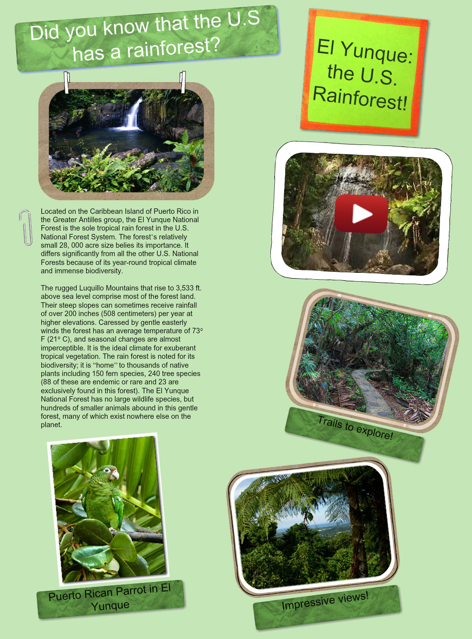 Did you know that the U.S. has a rainforest?