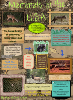 Mammals in the USA