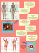 3rd Grade: Muscular and Skeletal Systems thumbnail