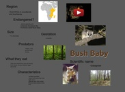 BUSH BABY BY EMMA HELLWEGE's thumbnail