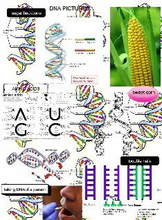 DNA PICTURES