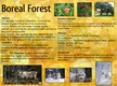 Boreal Forest thumbnail