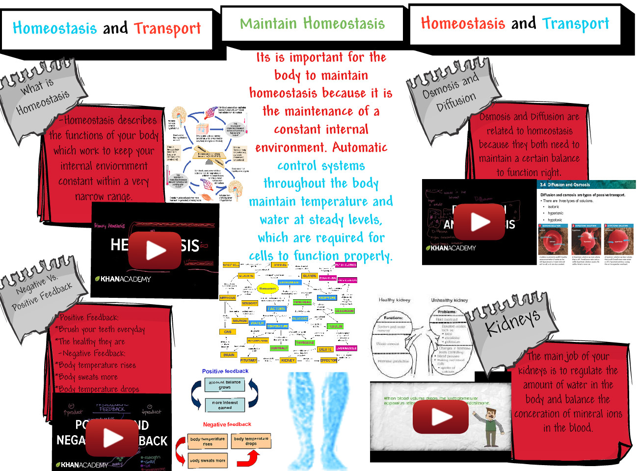 By Steven-Homeostasis And Transport