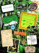 Rainforest Animals's thumbnail