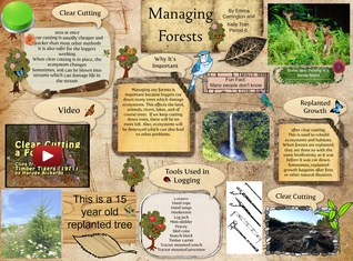 Managing Forests