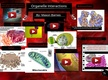Organelle Interactions thumbnail