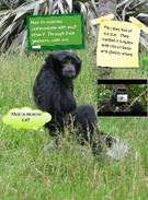 All About Primates's thumbnail