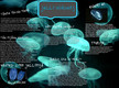 Jelly Invaders thumbnail