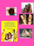 monkeys!!!!!!'s thumbnail