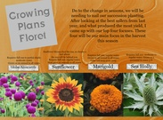 Floret Flower Summer Harvest's thumbnail