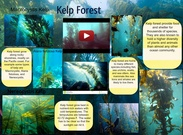 [2015] Ian Cruz (7th Period): Kelp Forest's thumbnail