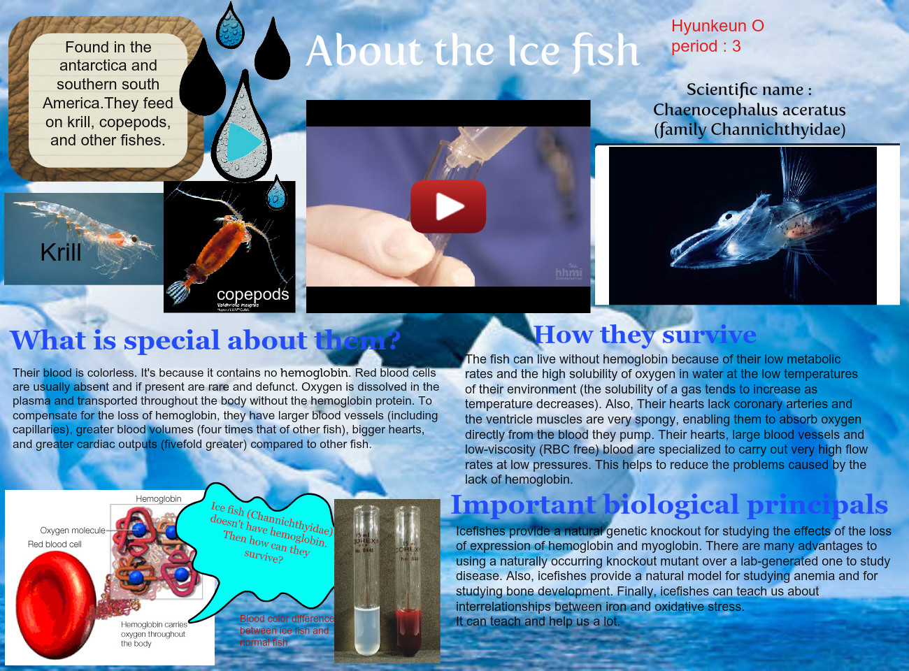 About the Icefish