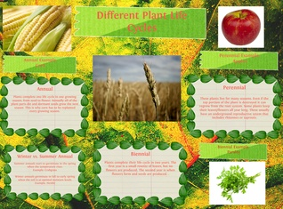 Different Plant Life Cycles