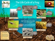Life Cycle of a Frog's thumbnail