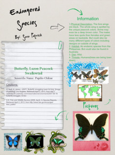 Endangered Species: Butterfly