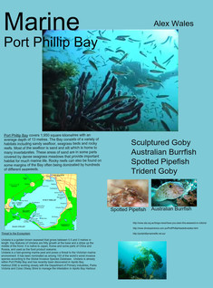 'Marine - Port Phillip Bay' thumbnail