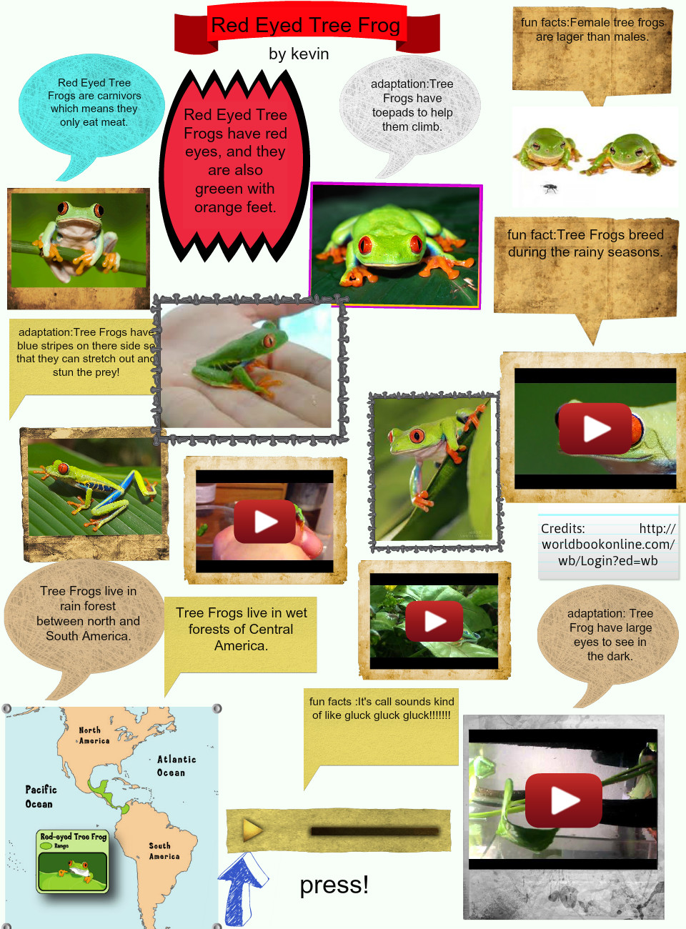 Red Eyed Tree Frog Kevin