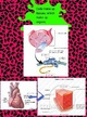cell-tissue-organ thumbnail