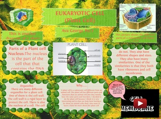 EUKARYOTIC CELL (Plant Cell)